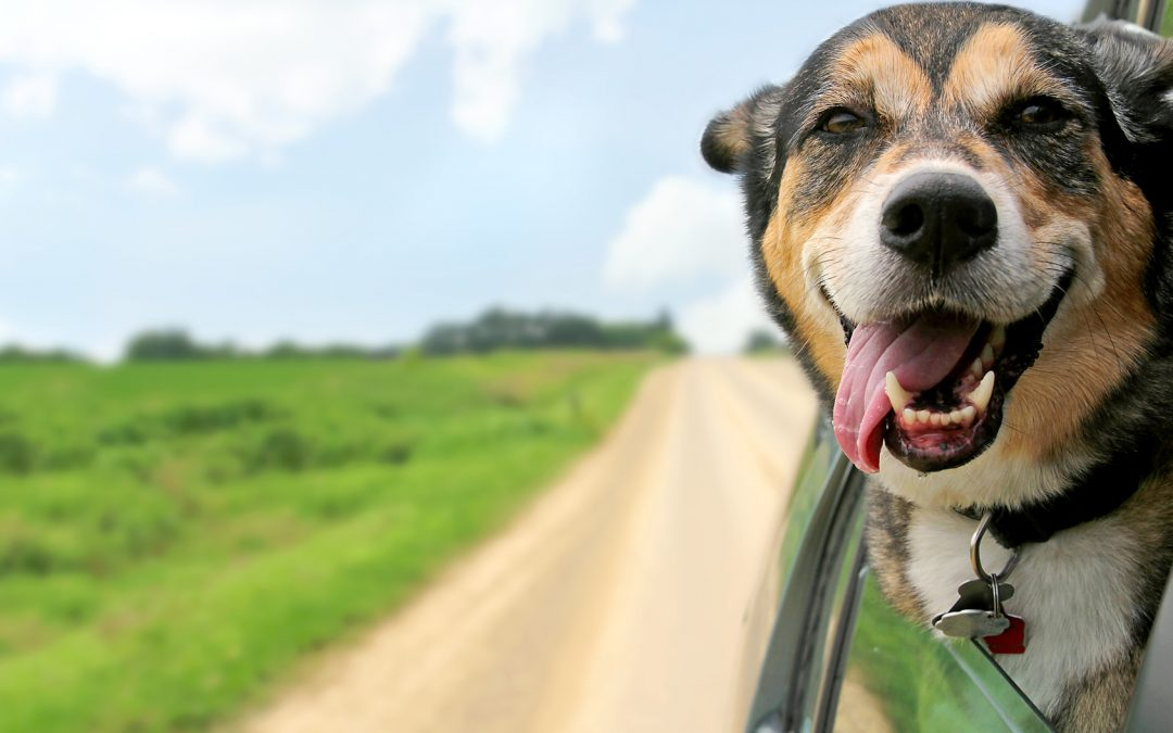 6 Tips for Making Your Move Easier on Your Dog