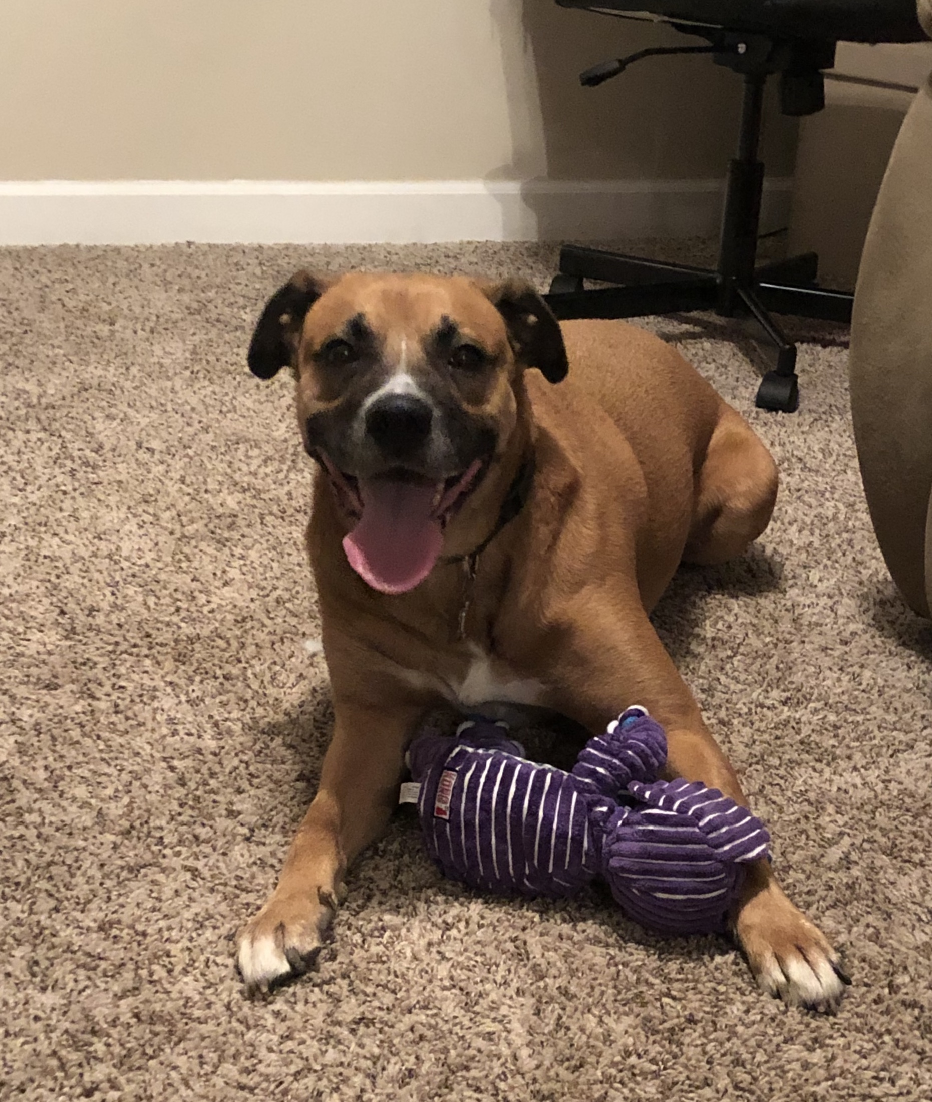 Happy-Dog-with-Toy